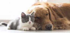 kitten and dog snuggle together with a white background